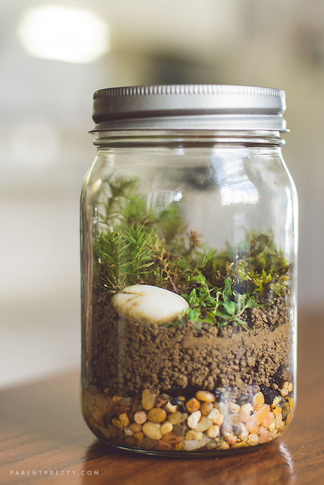 Moss Terrarium  |  Parent Pretty