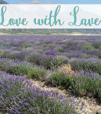 Essential Oils: In Love with Lavendar