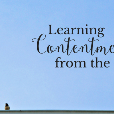 Learning Contentment from the Birds